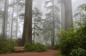 sequoias sequoia national park
